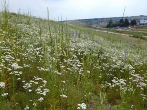 dichte vegetatie met mycorrhiza
