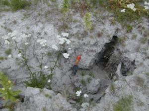 erosie zonder mycorrhiza