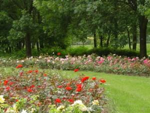 rosarium Schothorst 7