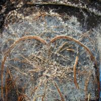Servaplant© Pinus ectomycorrhiza 2